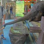 Wirick feeding elephant